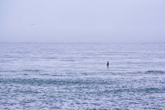 Paddler alone on the Ocean. A lone paddler on the wide ocean Royalty Free Stock Photography