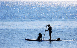 Paddler and Dog on Standup Paddle Board, Canada Stock Image