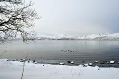 Paddlers de kayak sur le fjord avec des canards photographie stock libre de droits