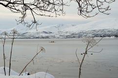 Paddlers de kayak sur le fjord avec des canards photos libres de droits