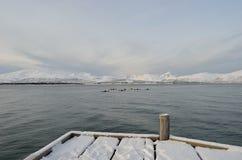 Paddlers na błękitnym fjord z śnieżną górą obraz royalty free