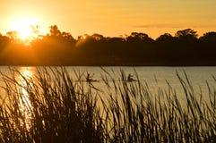 Paddlers van de brandingsski op een meer bij zonsondergang wordt gesilhouetteerd die Royalty-vrije Stock Foto's