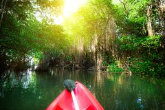 Paddling canoe through fantasy landscape of mangrove forest Royalty Free Stock Photo