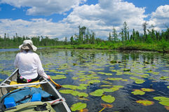Paddling through the lily pads Royalty Free Stock Photography