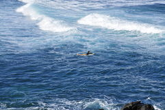Paddling surfer; Hookipa beach Royalty Free Stock Image