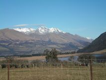A paddock with cows, a lake, and snow-topped mountains. A paddock with cows seen through a wire fence. There is a lake, with some snow-topped mountians in the royalty free stock photography