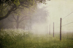 Paddock with fog. Paddock with early morning fog - Vintage look royalty free stock image