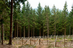Paddock in forest Stock Photography