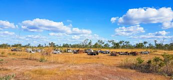 Rusty old cars. A paddock full of dumped old rusty cars Royalty Free Stock Photo
