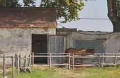Paddock och gammal ladugård för hästar i Italien Fotografering för Bildbyråer