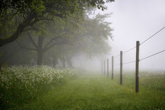 Paddock. Paddok with early morning fog royalty free stock photography