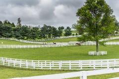 Paddocks of White Fences on Horse Farm Stock Photography