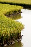Paddy. A green paddy field and water royalty free stock photography