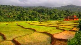 Paddy archiviert in Canacona Goa Indien Lizenzfreie Stockfotografie