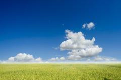 Paddy archivierte mit blauem Himmel und Wolke in sonnigem Stockbild