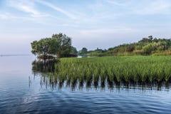 Paddy auf Frischwassermeer Stockfotografie