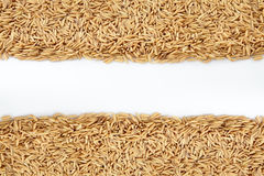 Paddy Background Royalty Free Stock Photo