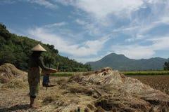 paddy brings happiness Royalty Free Stock Photos