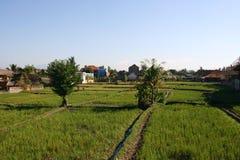 Paddy de gisement de riz Photos libres de droits