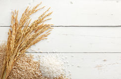 Paddy et riz Photographie stock