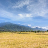 Paddy farm Royalty Free Stock Images