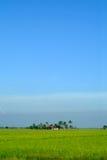 Paddy-Feld Stockbild