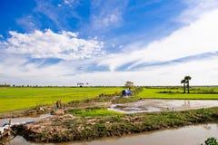 Paddy-Felder in Kambodscha Lizenzfreies Stockfoto