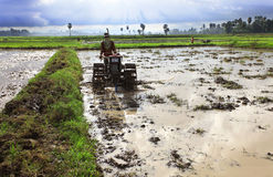 Paddy field. Working on paddy field to grow Royalty Free Stock Photos