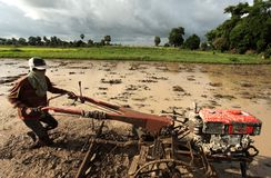 Paddy field. Working on paddy field to grow Stock Photos