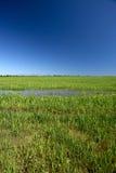 Paddy field royalty free stock photo
