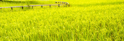 Paddy Field Stock Images