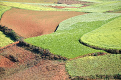 Paddy field. Colorful paddy field kunming china royalty free stock image