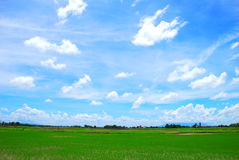 Paddy Field. The beautiful scenery of paddy field in Kedah, Malaysia stock photos