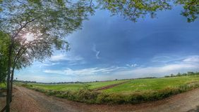 Paddy Field Fotografia de Stock