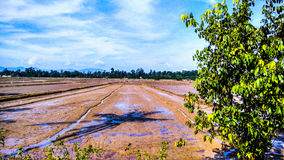 Paddy Field Photo libre de droits