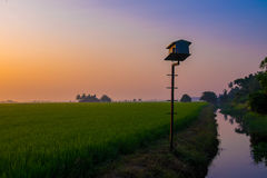 Paddy Field Stock Foto's