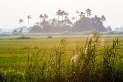 Paddy Field Fotografie Stock