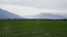 Paddy Field, Agriculture, Field, Plain royalty free stock photo