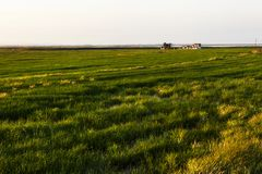 paddy field, agriculture Royalty Free Stock Photos