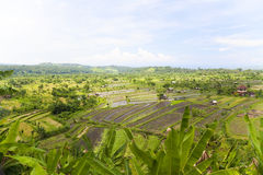 Paddy Field, Amed, East Bali, Indonesia. Image of a paddy field at Amed, East Bali, Indonesia Royalty Free Stock Photography