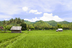 Paddy Field, Amed, East Bali, Indonesia Stock Photos