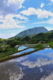Paddy Field And Blue Sky Stock Photography