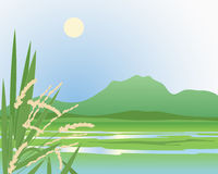 Paddy field background Royalty Free Stock Image