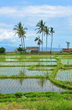 Paddy field in Bali Stock Photos