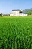 Paddy-field and beautiful village . Stock Photography