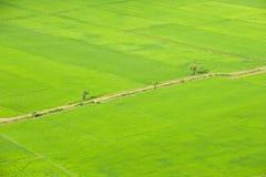 Paddy field ,bird eye view Royalty Free Stock Image