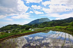 Paddy field and blue sky royalty free stock photo
