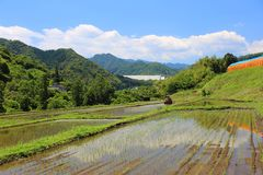 Paddy field and blue sky stock photo