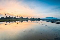 Paddy Field in Bukit Mertajam Penang, Malaysia. Reflection Sunrise in Paddy Field in Bukit Mertajam Penang, Malaysia Stock Photography