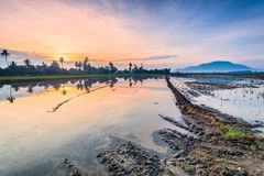 Paddy Field in Bukit Mertajam Penang, Malaysia. Reflection Sunrise in Paddy Field in Bukit Mertajam Penang, Malaysia Stock Photos
